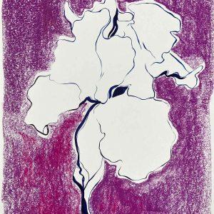 Chalk Iris I