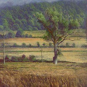 Oak in the Corn II