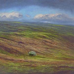 Solitary Hawthorn, Long Mynd