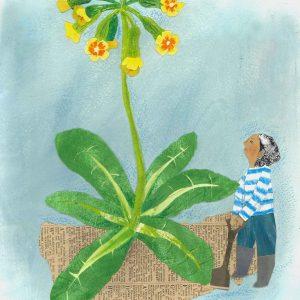 Cowslip Gardener