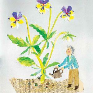 Wild Pansy Gardener