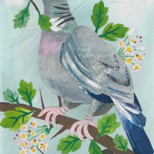 Wood Pigeon and Hawthorn Blossom