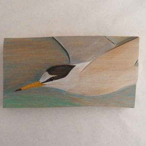 little tern - flying