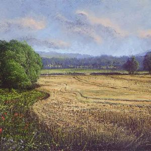 Cornfield edge near Wetmore