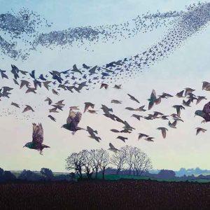 Black Sun - A Bird Ballet